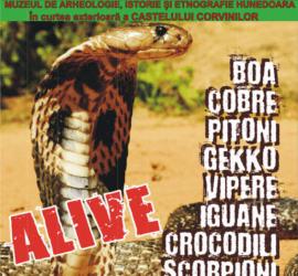 expozitie-reptile-hunedoara