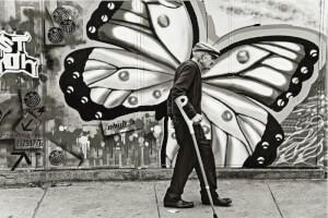 metamorfoza batran fluture