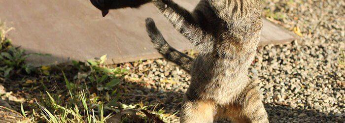 fotografia saptamanala pisica veverita